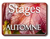 Stages automne